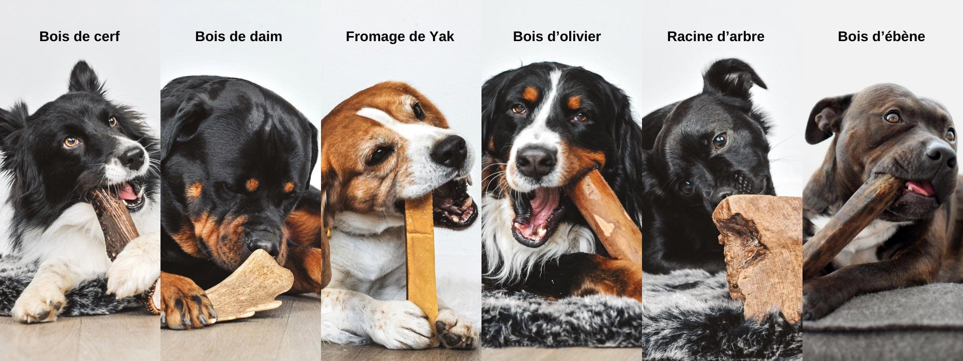 Os à mâcher naturels pour chiens de toutes tailles